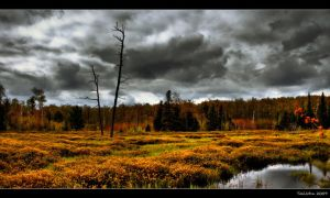 Off Trail One - Swamp by TallJohn