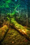 fairy forest by t3hr