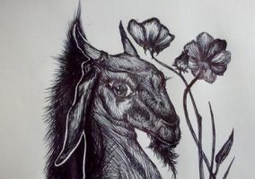 Ram and poppies by SeptemberDecember