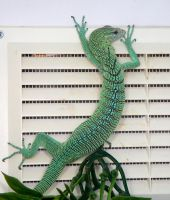 Green tree lizard by NickiStock