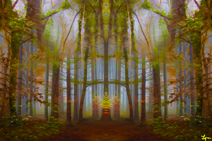 Forests of Time by twocollective