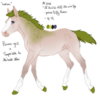 2345 Padro Foal Designed by Artoffreedom by HaloSon