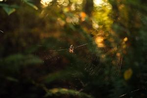 Spider Web by vmulligan