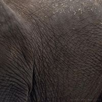 Elephant by Sato-photography