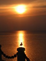 Sunrise and a Seagull by Sunstars