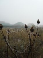 Cobwebs in the fog 3 by Philosopher-Vinni
