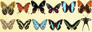 Mac Icons - Butterflies Set 2 by Nastino47