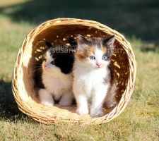 Kittens by PhotographySW