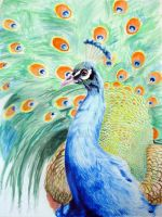 Peacock by MuseInOnlyColors