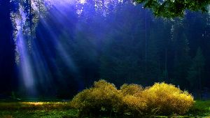 Rays on the Meadow by TickTix