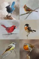 Study of birds by Goran-Alena