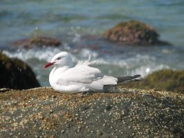 Seagull by xTaionx