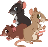 Rattie designs by Feyrah