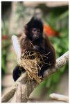 Monkey 008 by ShineOverShadow