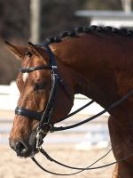 Finnish warmblood stallion by wakedeadman