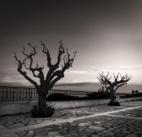 two trees... by denis2