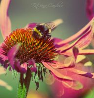Pollination by VisualFeelings