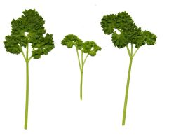 Parsley trees by xwattepoppl