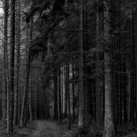 dark forest by Wilithin