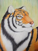 Tiger for ZionWG by Tallonis