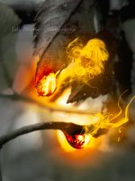 Fire by Floreina-Photography