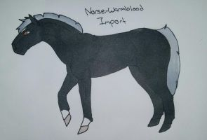 Norse Warmblood Import 1 by Onyx-Niight