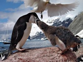 Antarctica wildlife by EfratNakash