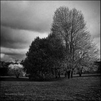 in darkness by Viand