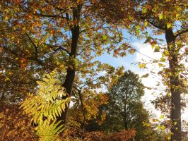 Wyre Forest in Autumn by Oddity-1991