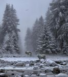 Wolves In The Snow.. by AledJonesStockNArt