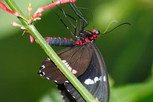 Red Spots tasting Red Nectar by S-H-Photography