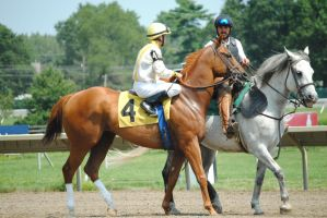 Racehorse Stock 35 by Vance-Equine-Stock