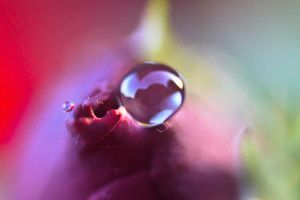 Waterdrop on a rose V by luka567