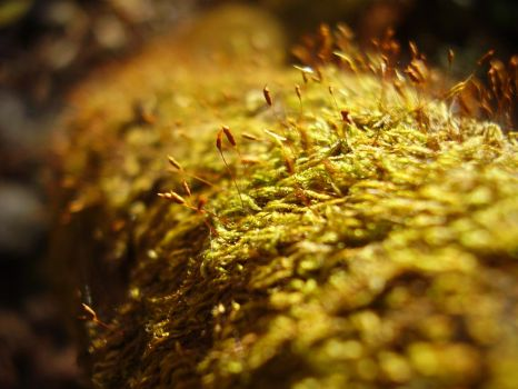 moss by Max-CCCP