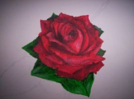 painted rose by damean92