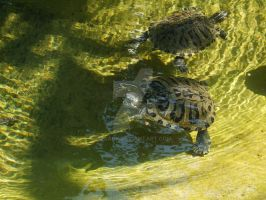 Turtles 02 by Roack