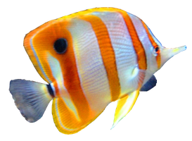 Fish PNG by NotStopSmile