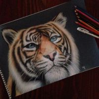 Coloured Tiger Portrait by Narniakid