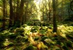 Forest of Endor by scotto