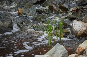 Water Washing By Small Reeds by A-Sped-Kid
