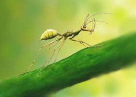 Ceratomyrmex - the unicorn ant by Hyrotrioskjan