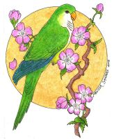 Quaker Parakeet Commission by LuthienNightwolf