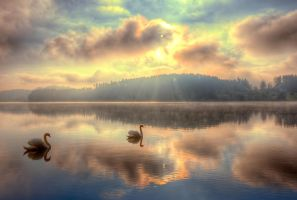 Swans in paradise by barukcic