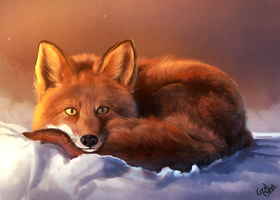 Fox by GralMaka