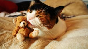 The love only a cat and Teddy share.... by Sydney0007