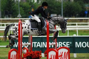 Show Jumping by EllinorBergman