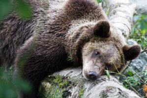 A nap against a log. by JRL5