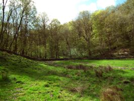 boggy field by harrietbaxter