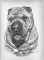 Oscar the Shar-pei by Karentownsend