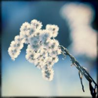 cold cold by wojtar
